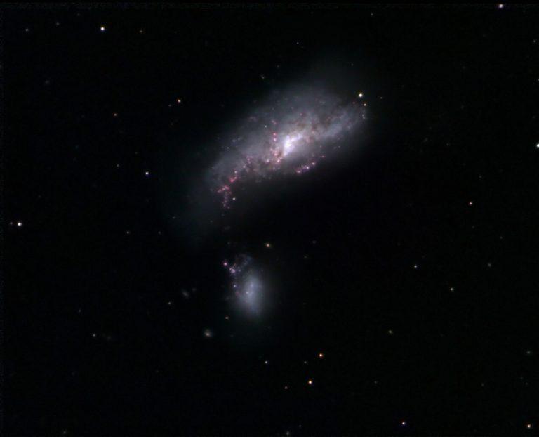 NGC 4490 | Cocoon Galaxy | Arp 229 | mit Begleiter NGC 4485 | Canes Venatici